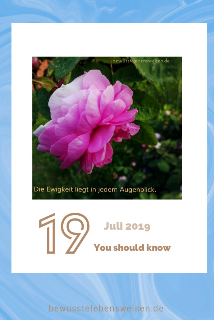 Bewusst leben, Rosenblüte, Kalenderblatt