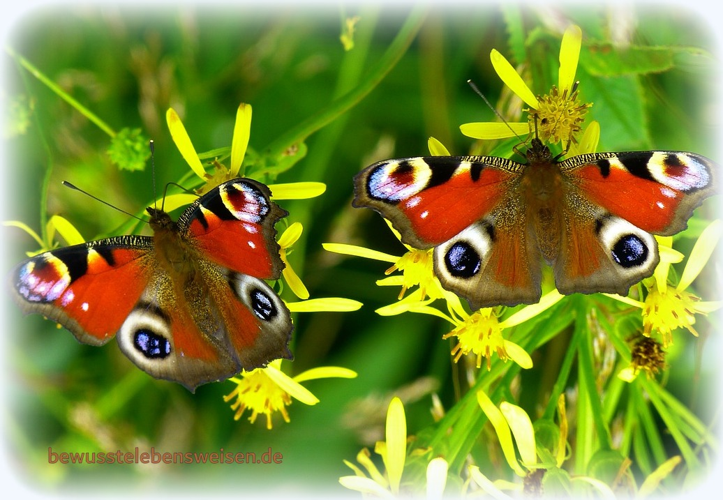 Atmen Verbundener Atem Bewusstsein Flügel entfalten