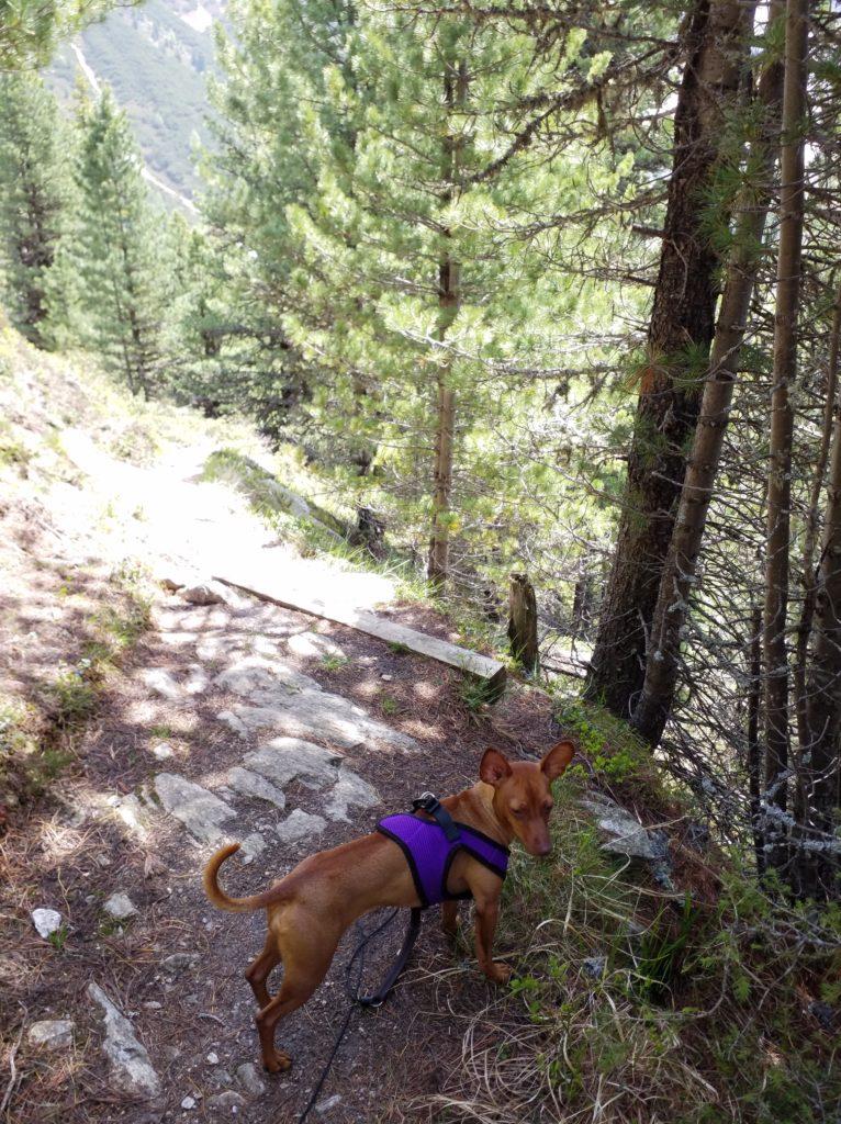 Wandern, Meditation, Lenkung nach Grigori Grabovoi